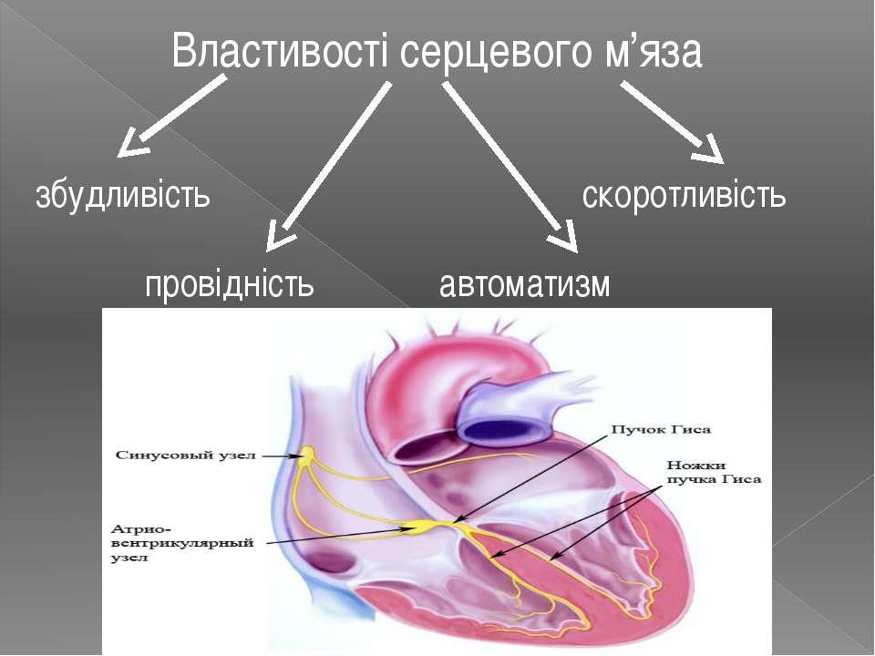 Властивості серцевого м'яза збудливість провідність автоматизм скоротливість