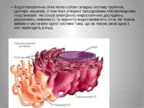 Ендоплазматична сітка являє собою складну систему трубочок, цистерн, мішечків...