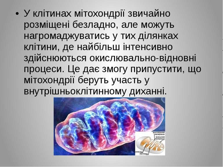 У клітинах мітохондрії звичайно розміщені безладно, але можуть нагромаджувати...