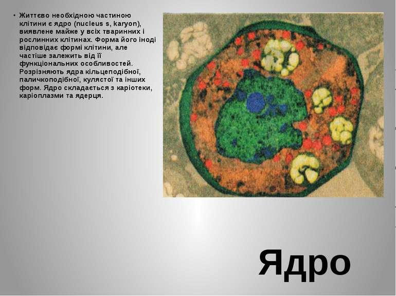 Ядро Життєво необхідною частиною клітини є ядро (nucleus s, karyon), виявлене...