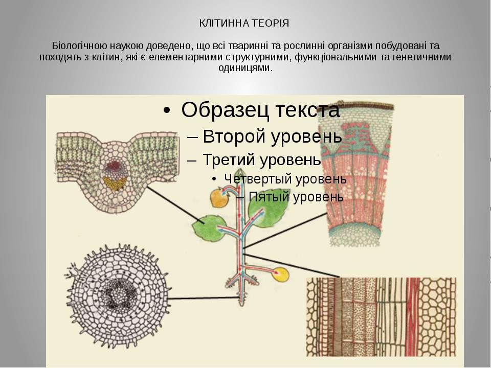 КЛІТИННА ТЕОРІЯ Біологічною наукою доведено, що всі тваринні та рослинні орга...