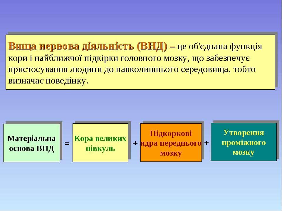 Вища нервова діяльність (ВНД) – це об'єднана функція кори і найближчої підкір...