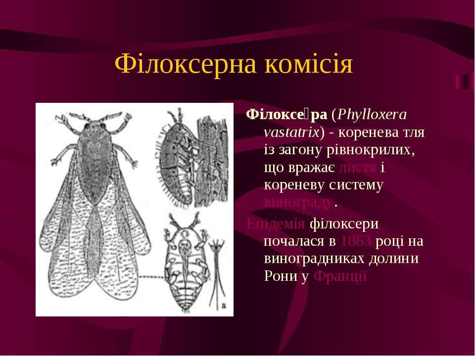 Філоксерна комісія Філоксе ра (Phylloxera vastatrix) - коренева тля із загону...