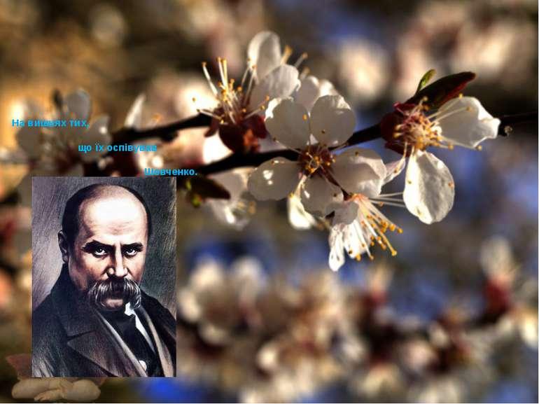 На вишнях тих, що їх оспівував Шевченко.