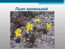 Льон кримський