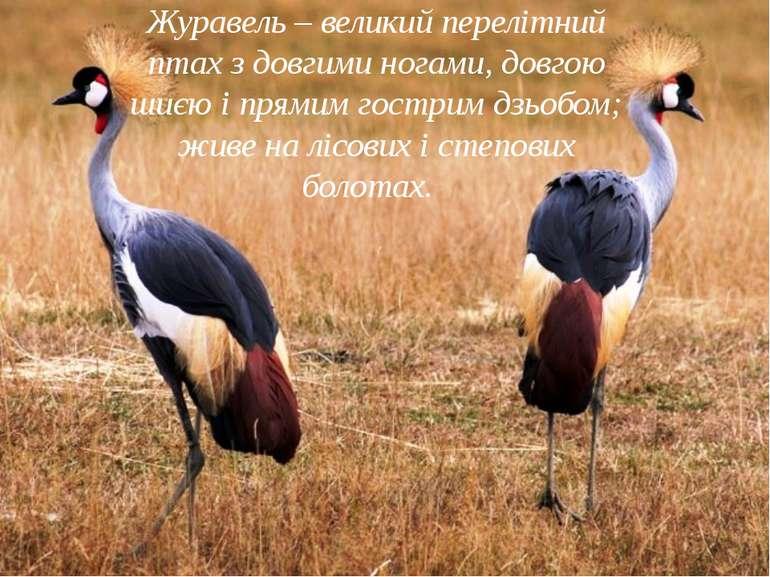 Журавель – великий перелітний птах з довгими ногами, довгою шиєю і прямим гос...