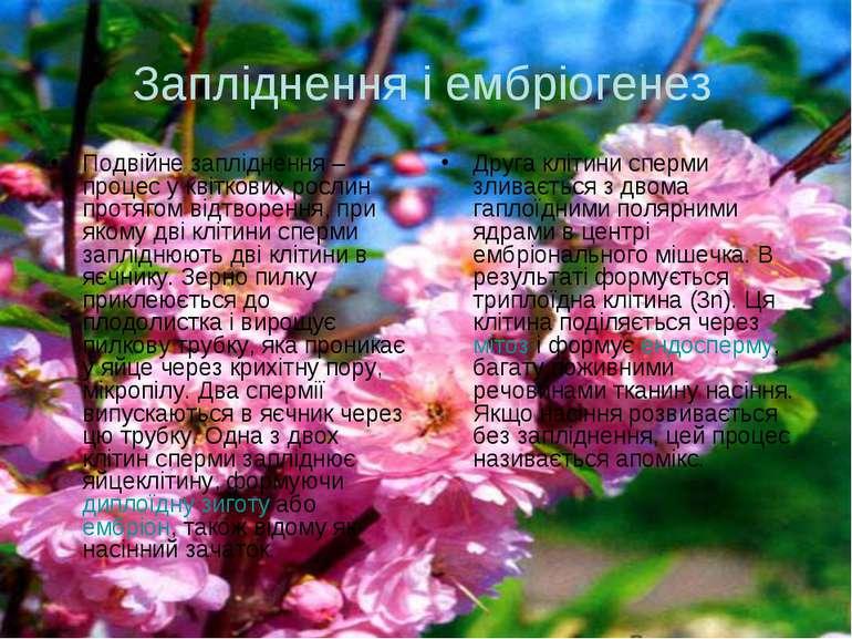 Запліднення і ембріогенез Подвійне запліднення – процес у квіткових рослин пр...