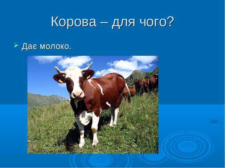 Корова – для чого? Дає молоко.