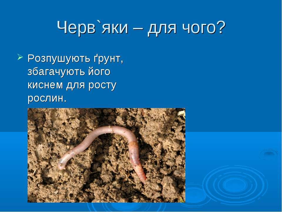 Черв`яки – для чого? Розпушують ґрунт, збагачують його киснем для росту рослин.