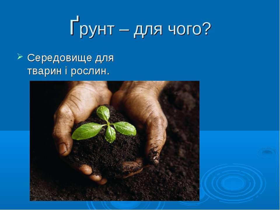 Ґрунт – для чого? Середовище для тварин і рослин.