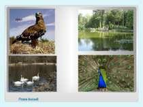 Птахи Асканії орел павич лебеді озеро для птаства