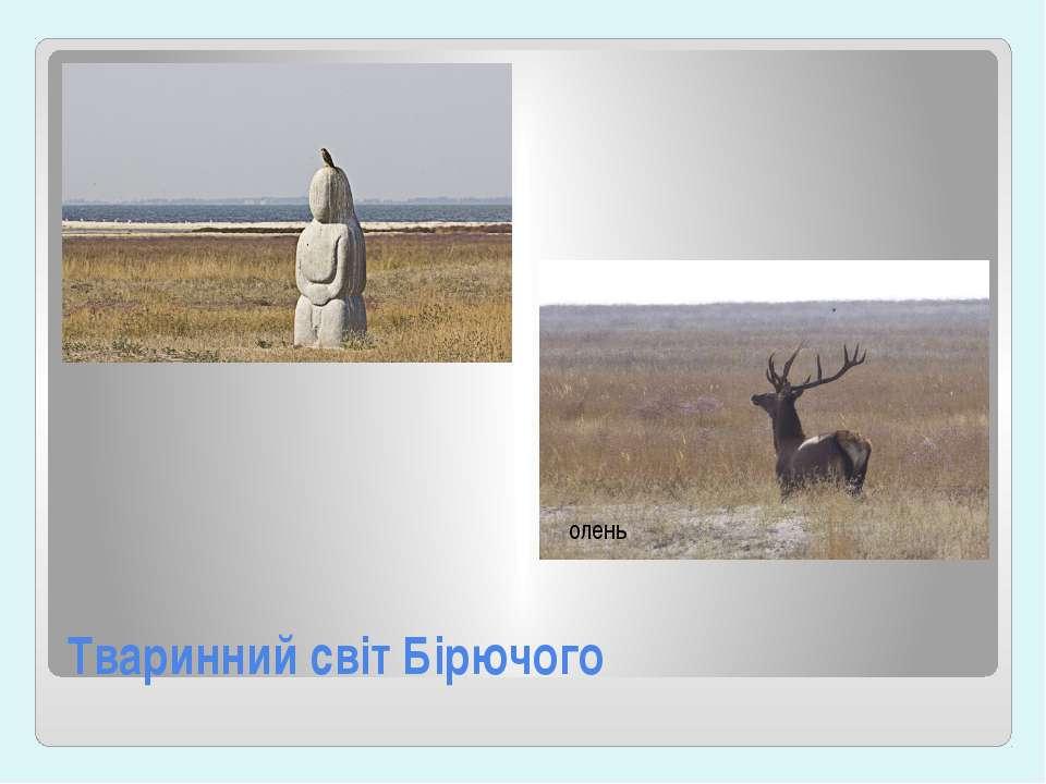 Тваринний світ Бірючого олень