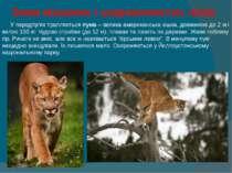 Зона мішаних і широколистих лісів  У передгір'ях трапляється пума – вели...