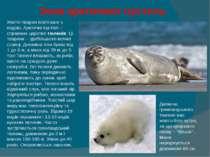 Зона арктичних пустель Життя тварин пов'язане з водою. Арктичні пустелі – сп...