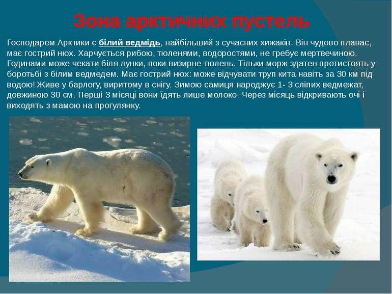 Зона арктичних пустель Господарем Арктики є білий ведмідь, найбільший з суча...