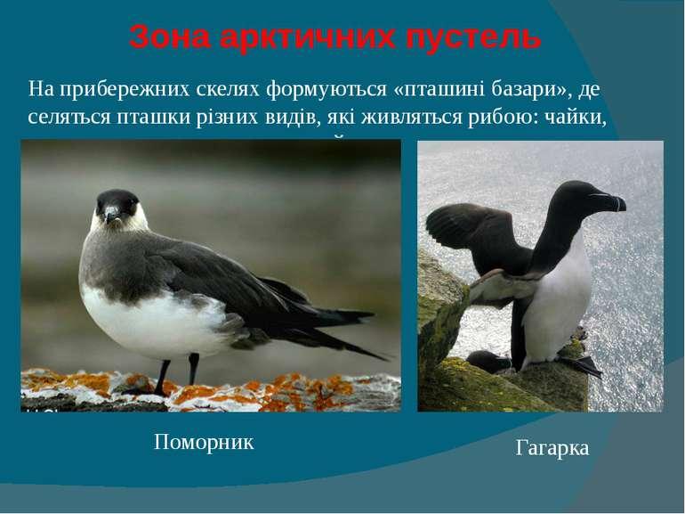 Зона арктичних пустель На прибережних скелях формуються «пташині базари», де...