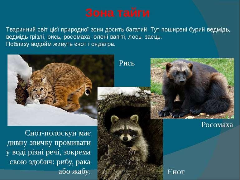 Зона тайги Тваринний світ цієї природної зони досить багатий. Тут поширені б...