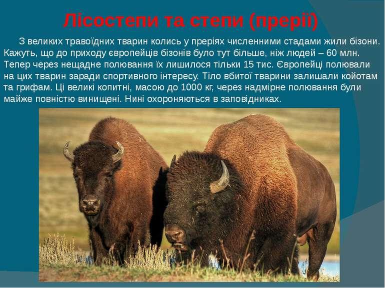 Лісостепи та степи (прерії) З великих травоїдних тварин колись у преріях числ...
