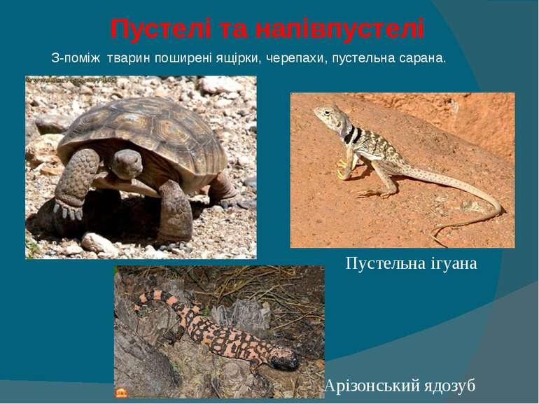 Пустелі та напівпустелі  З-поміж тварин поширені ящірки, черепахи, пустельна...
