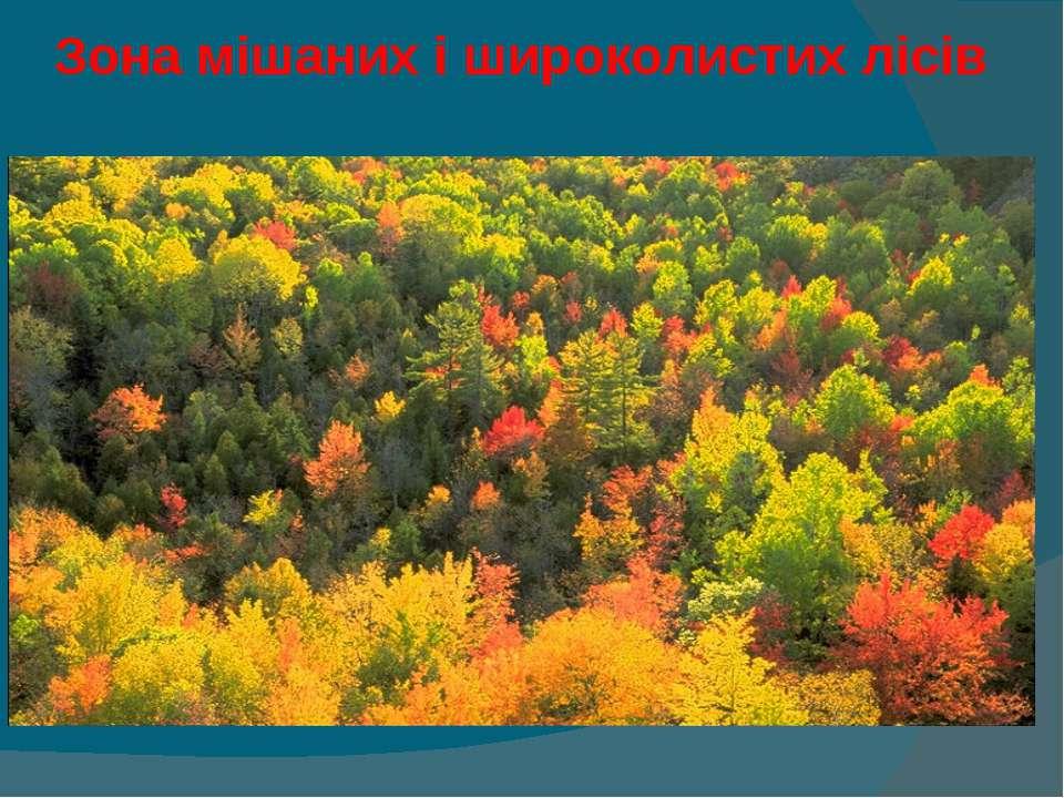 Зона мішаних і широколистих лісів