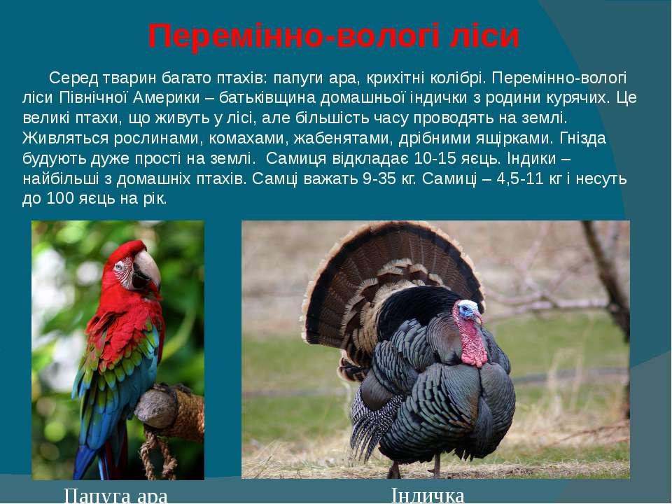 Перемінно-вологі ліси Серед тварин багато птахів: папуги ара, крихітні колібр...
