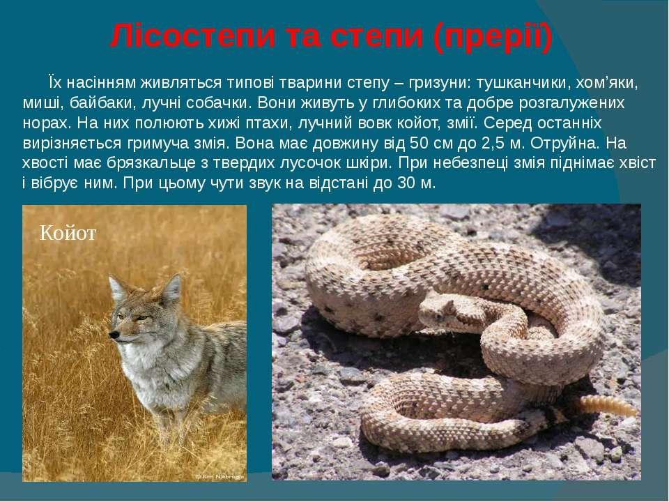 Лісостепи та степи (прерії) Їх насінням живляться типові тварини степу – гриз...