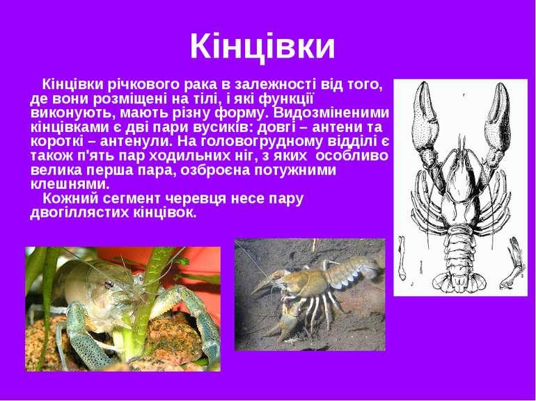 Кінцівки Кінцівки річкового рака в залежності від того, де вони розміщені на ...