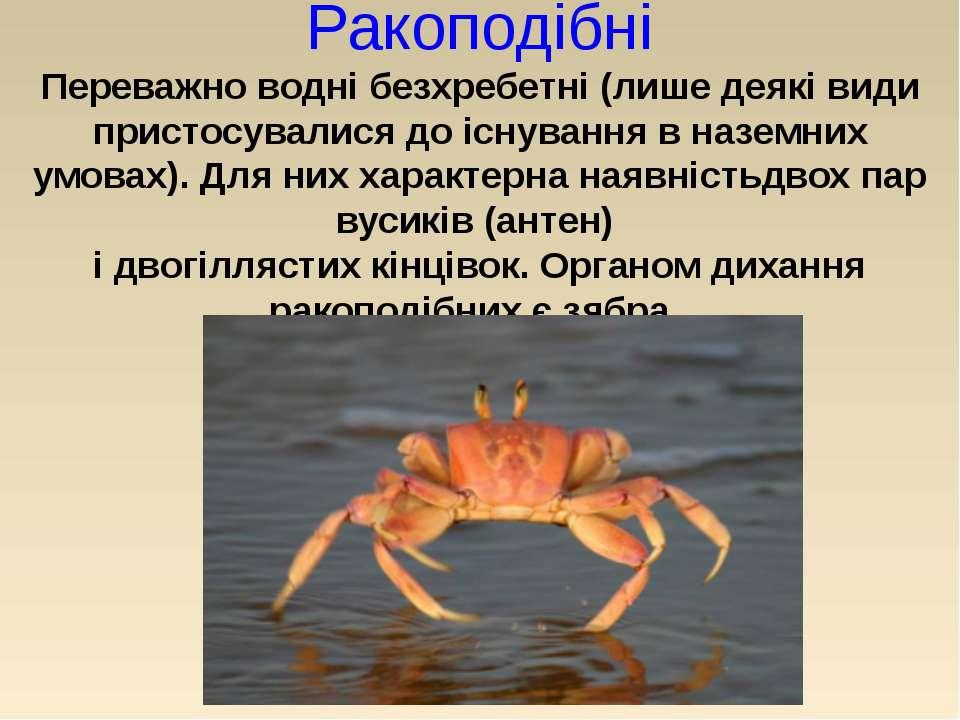 Ракоподібні Переважно водні безхребетні (лише деякі види пристосувалися до іс...