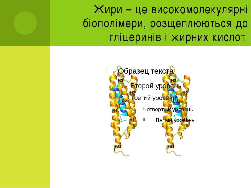 Жири – це високомолекулярні біополімери, розщеплюються до гліцеринів і жирних...