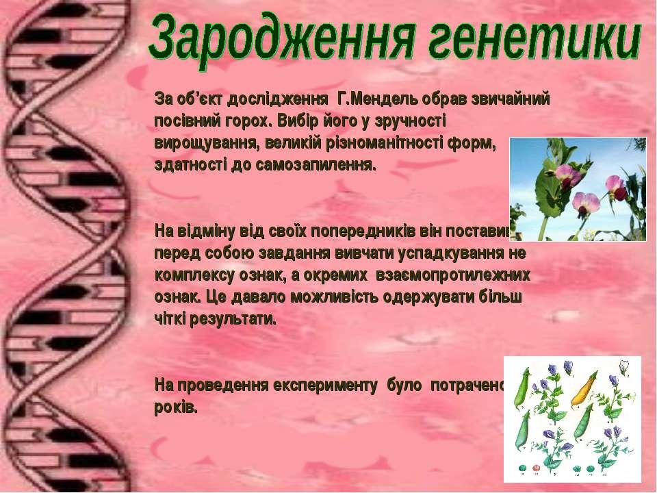 За об'єкт дослідження Г.Мендель обрав звичайний посівний горох. Вибір його у ...
