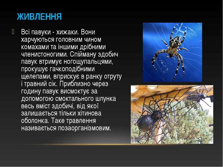 Всі павуки - хижаки. Вони харчуються головним чином комахами та іншими дрібни...