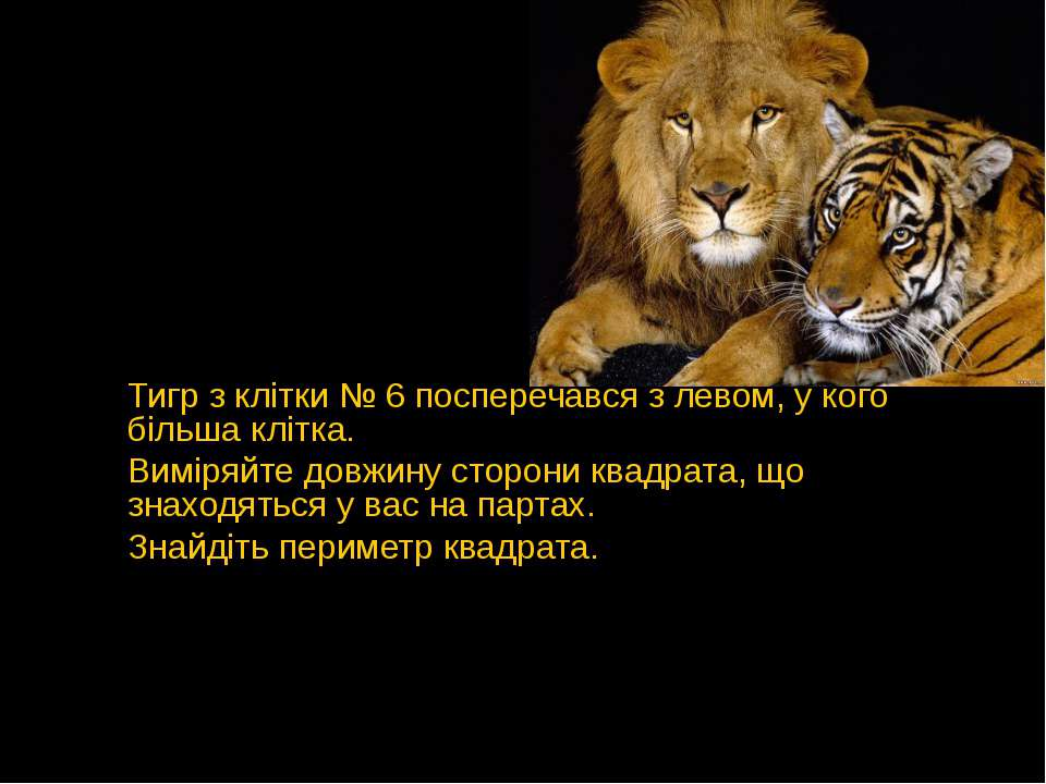 Тигр з клітки № 6 посперечався з левом, у кого більша клітка. Виміряйте довжи...