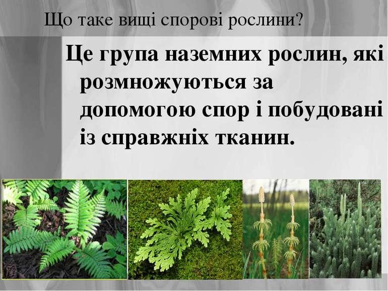 Що таке вищі спорові рослини? Це група наземних рослин, які розмножуються за ...