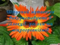 Штучний мутагенез використовують в селекції рослин та мікроорганізмів