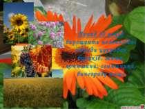 Понад 30 років вирощують поліплоїдні гібриди цукрових буряків, жита, конюшини...