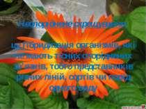 Неспоріднене схрещування- це гібридизація організмів, які не мають тісних спо...