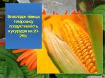 Внаслідок явища гетерозису продуктивність кукурудзи на 20-25%