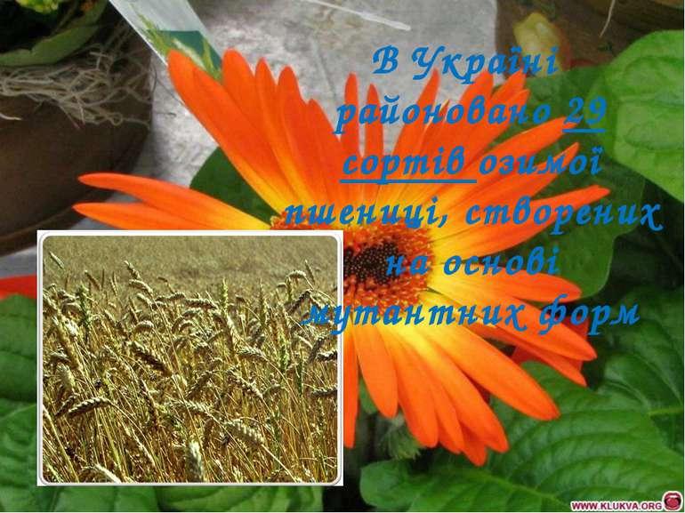 В Україні районовано 29 сортів озимої пшениці, створених на основі мутантних ...