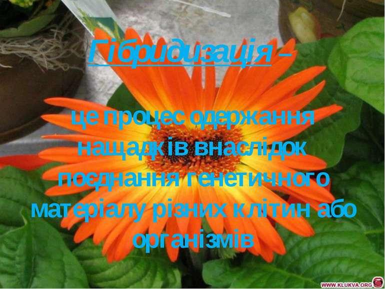 Гібридизація – це процес одержання нащадків внаслідок поєднання генетичного м...