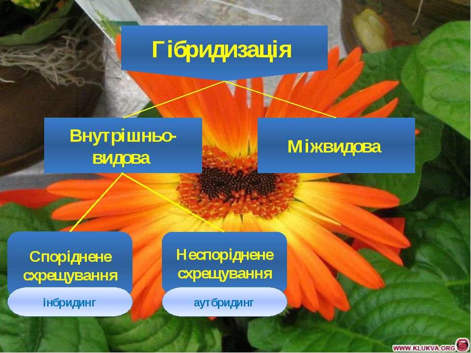 Гібридизація Внутрішньо-видова Міжвидова Споріднене схрещування Неспоріднене ...