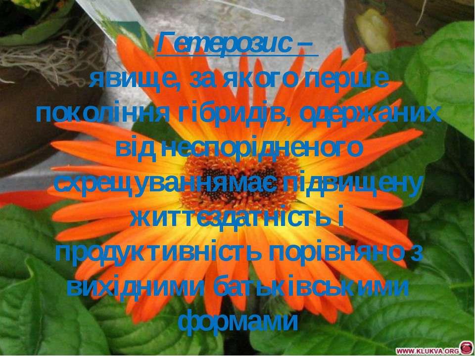 Гетерозис – явище, за якого перше покоління гібридів, одержаних від неспорідн...