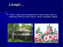 з історії … З давніх – давен українці прикрашали свої садиби квітами. Серед н...