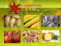 Цей материк є батьківщиною картоплі, помідорів, кукурудзи, арахісу, бавовни й...