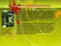 В непролазних хащах бразильських джунглів росте незвичайна ліана. Це – монсте...