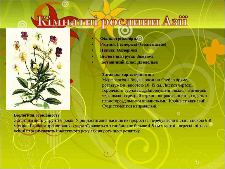 Фіалка триколірна Родина: Геснерієві (Gesneriaceae) Підтип: Однорічні Біологі...