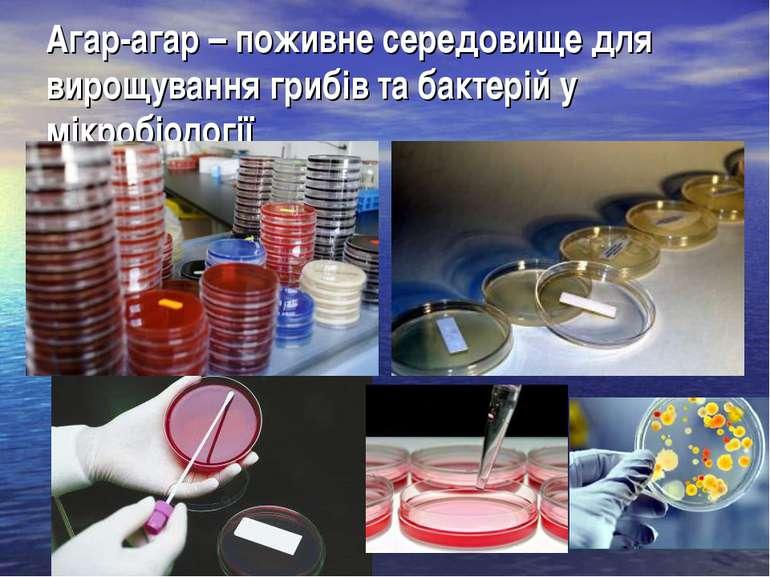 Агар-агар – поживне середовище для вирощування грибів та бактерій у мікробіол...