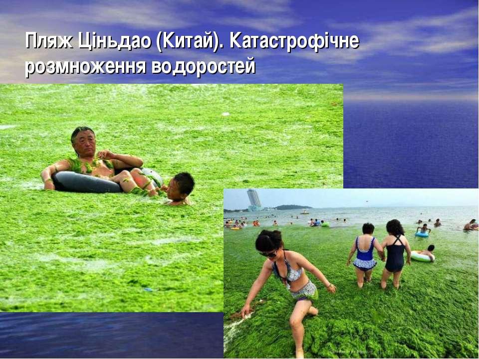 Пляж Ціньдао (Китай). Катастрофічне розмноження водоростей