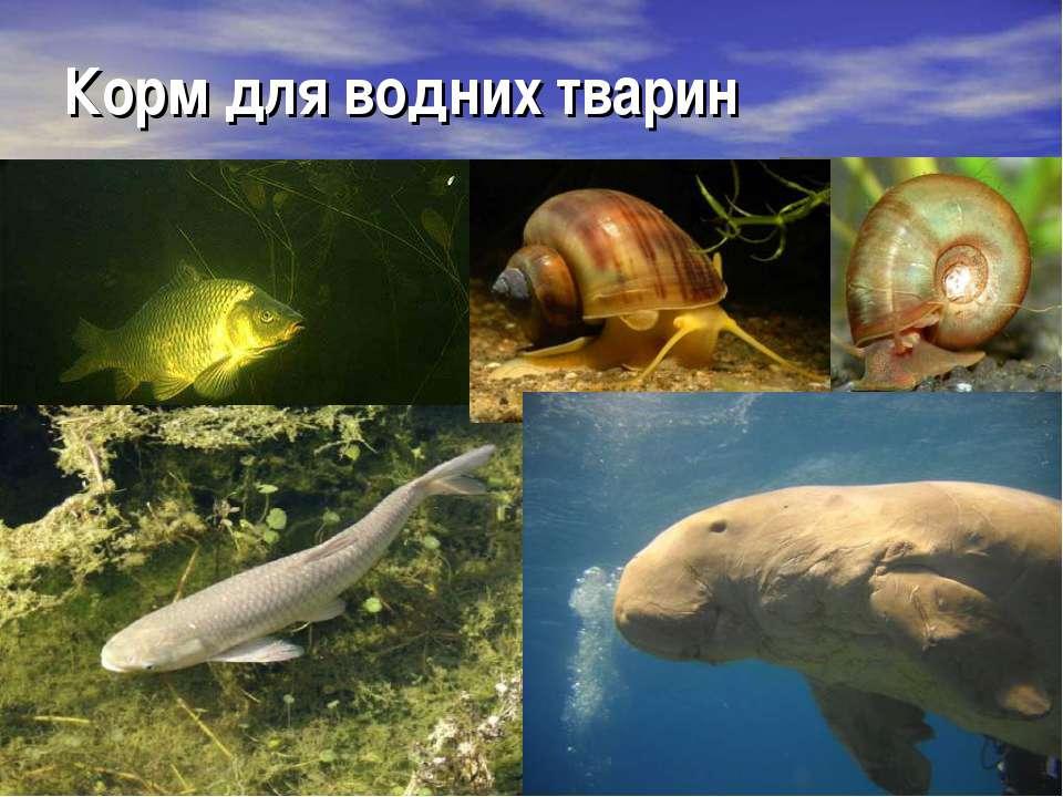 Корм для водних тварин