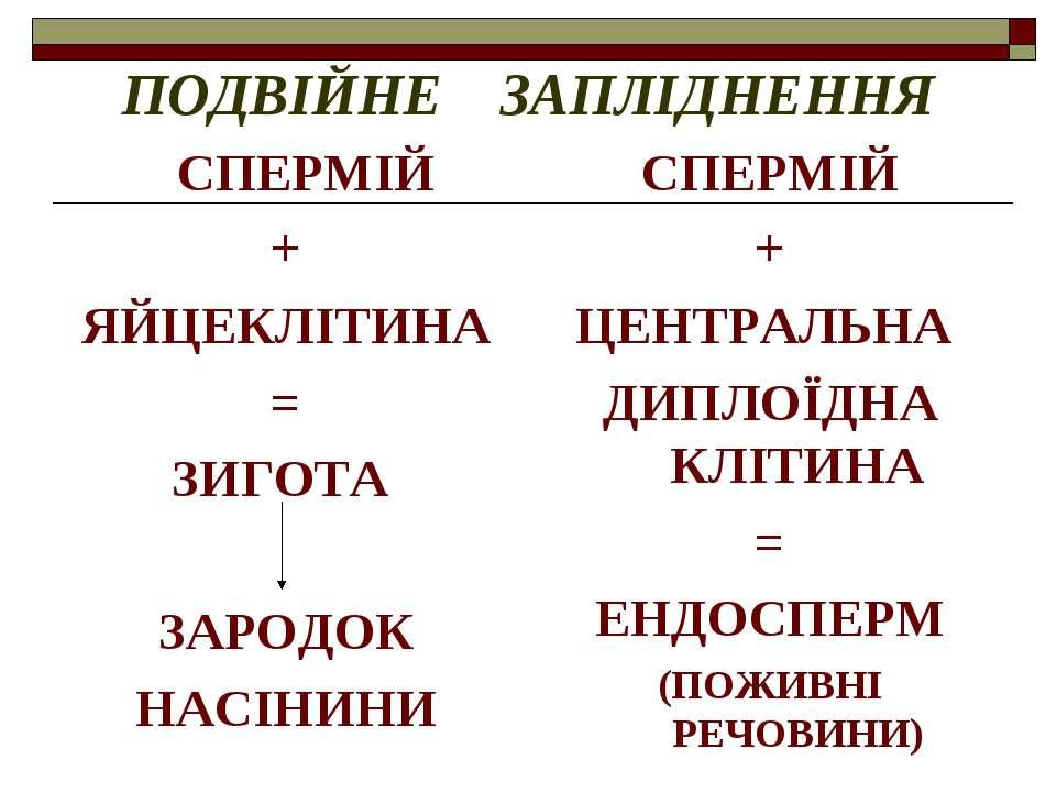 ПОДВІЙНЕ ЗАПЛІДНЕННЯ СПЕРМІЙ + ЯЙЦЕКЛІТИНА = ЗИГОТА ЗАРОДОК НАСІНИНИ СПЕРМІЙ ...