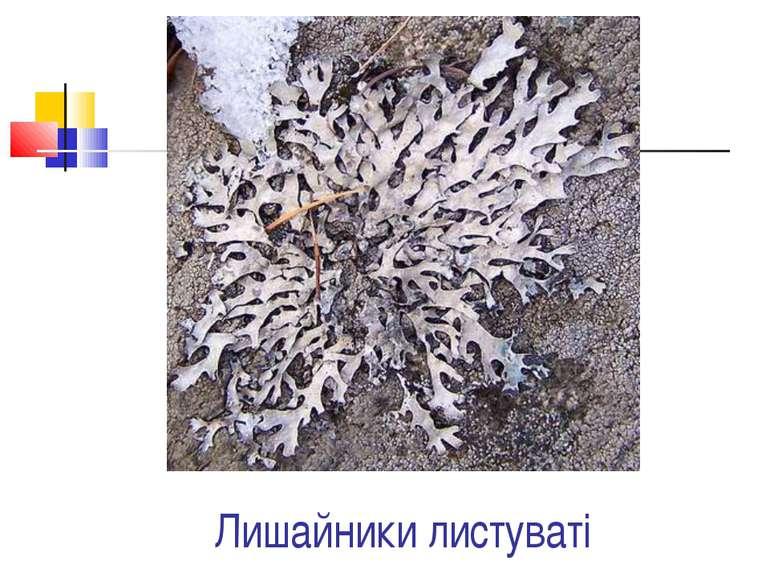 Лишайники листуваті